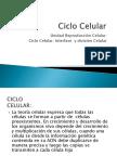 División Celular.ppt