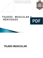 Tejdo Muscular y Nervioso
