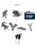 Lembar Kerja Siswa Animalia Vertebrata (Gambar)