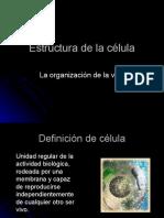 tema-6-estructura-de-la-clula-1198271200561776-2