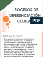 procesosdediferenciacincelular-141001054255-phpapp01