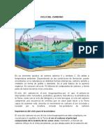 CICLO DEL CARBONO 2.doc