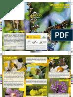 Triptico Polinizadores Silvestres Nivel01