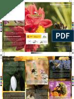 Triptico Polinizadores Silvestres Nivel02