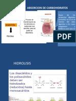 Metabolismo de Carbohidratos en Peces.2017pptx