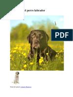 Cuidados Básicos y de Salud Del Perro Labrador Retriever