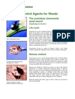 Biological Control Agents for Weeds