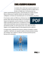 Los Huesos Del Cuerpo Humano