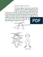 The Structure of Rana Cancarivora