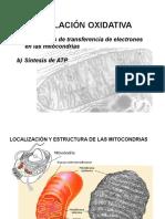 FosforilacionOxidativa_33246[1]