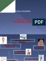 PDF Sistema Fonatorio y Laringe