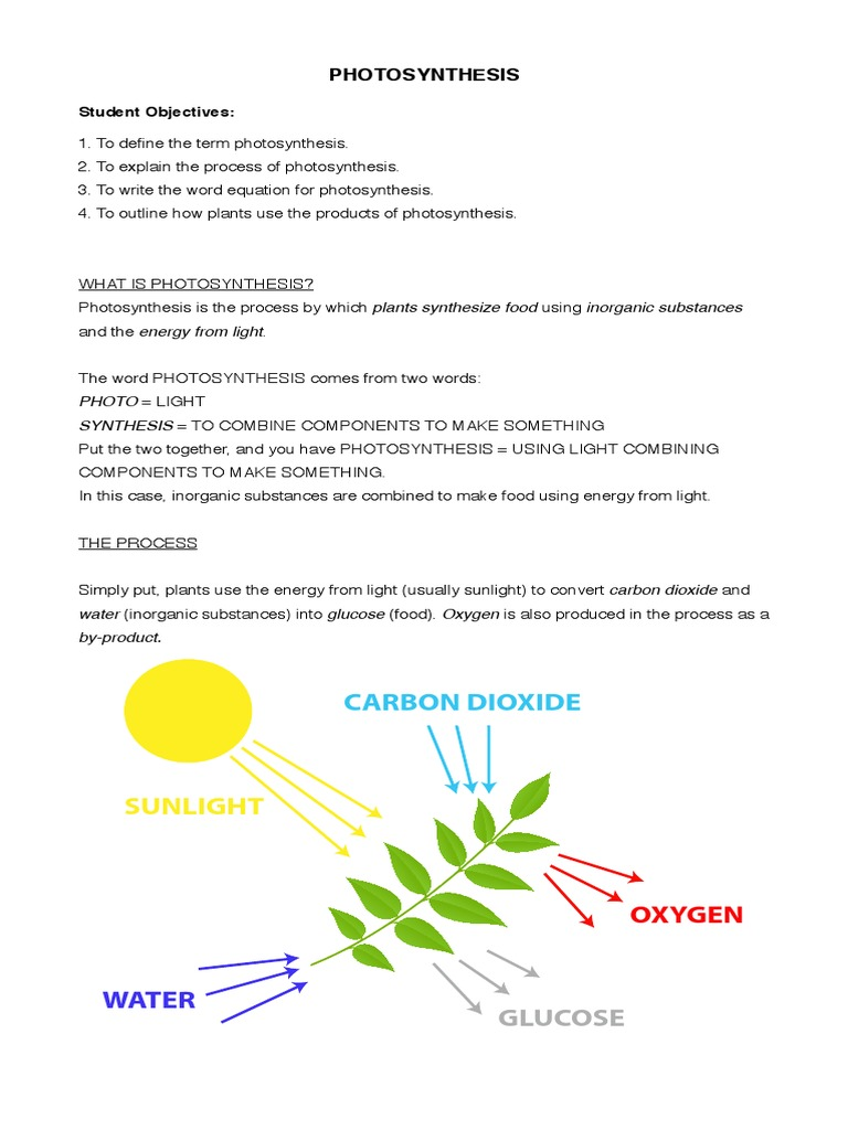 Hsb photosynthesis photosynthesis chloroplast ccuart Choice Image