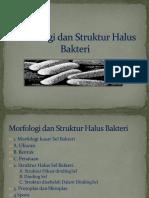 2 Morfologi Dan Struktur Halus Bakteri