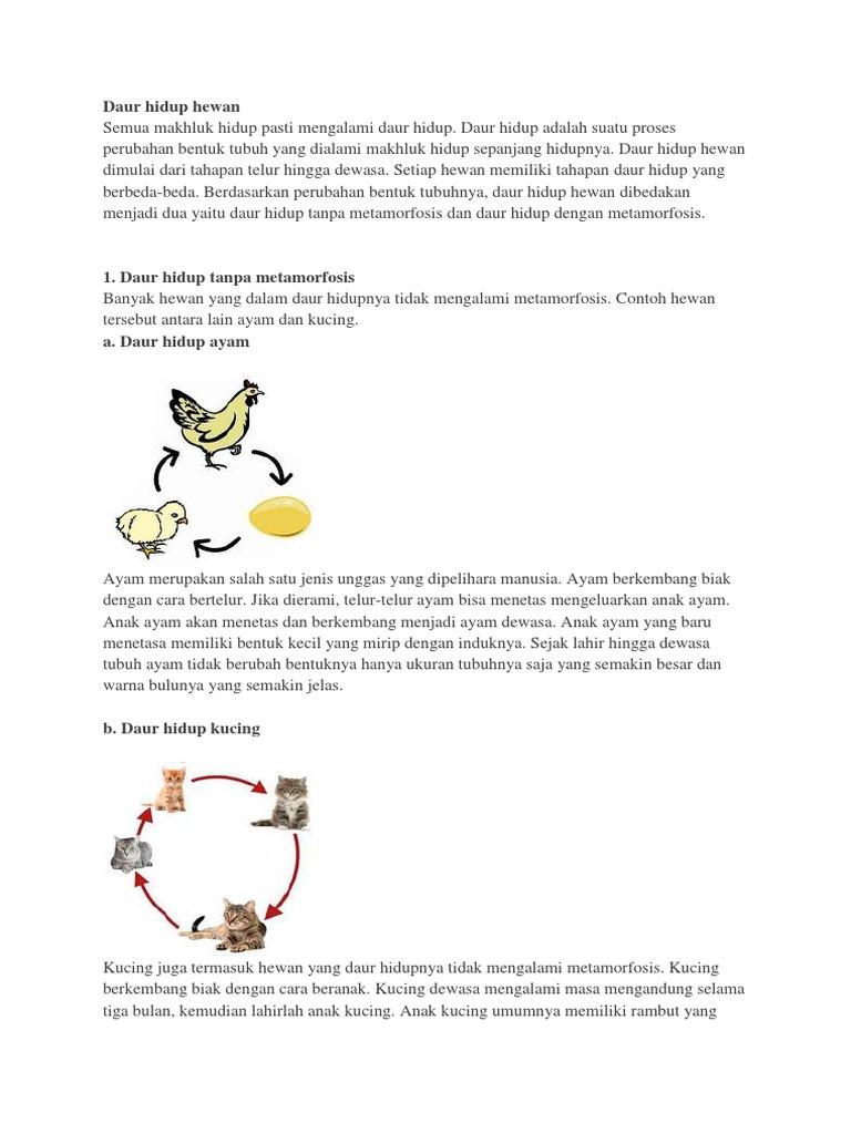 540+ Gambar Siklus Hidup Hewan Yang Mengalami Metamorfosis Sempurna Gratis Terbaru