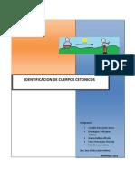 practica-cuerpos-cetonicos-1.docx