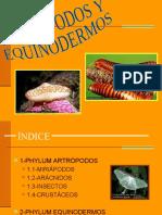 Antropodos Elenaandrea 130130153000 Phpapp02