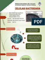 Exposicion - Pared Bacteriana