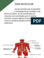 Sistema Muscular diana.pptx