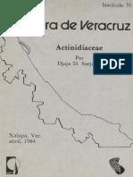 Flora de Veracruz Actinidiaceae