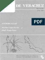 Flora de Veracruz Anthericaceae