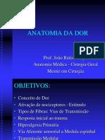 Anatomia Da Dor Periferico e Medula