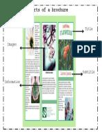 Parts of a Brochure