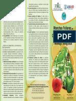 Manchas Foliares de Tomate y Chile Causadas Por Bacterias