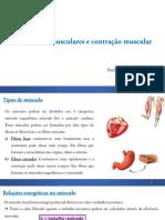 Aula 6 - Alavancas Musculares e Contração