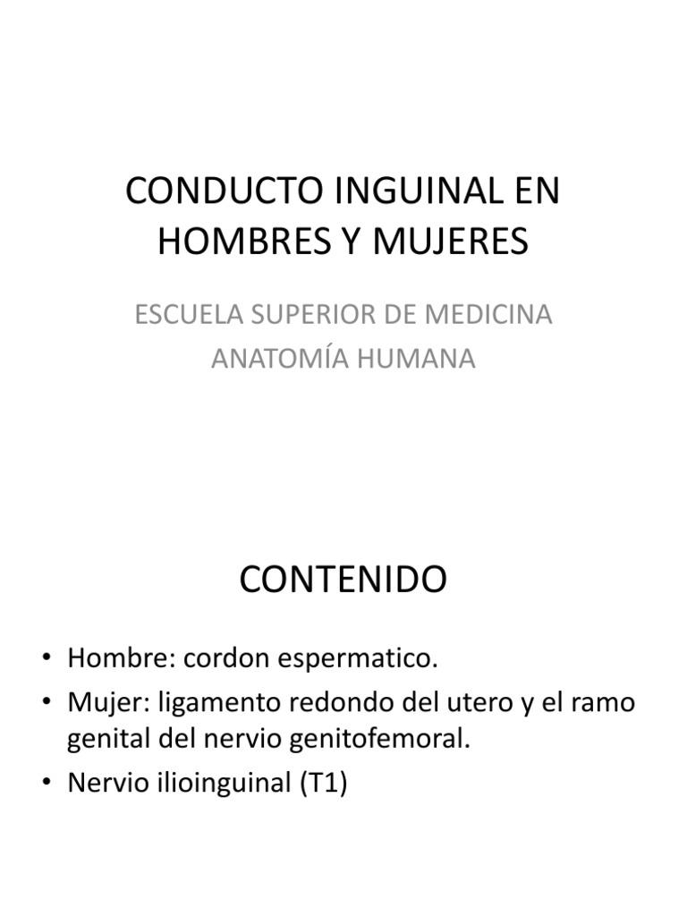 Conducto Inguinal Final