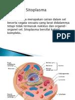Komponen sitoplasma