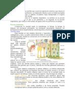 Histologia Del Sistema Respiratorio