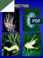 Kuliah Insek Patologi Cendawan 1