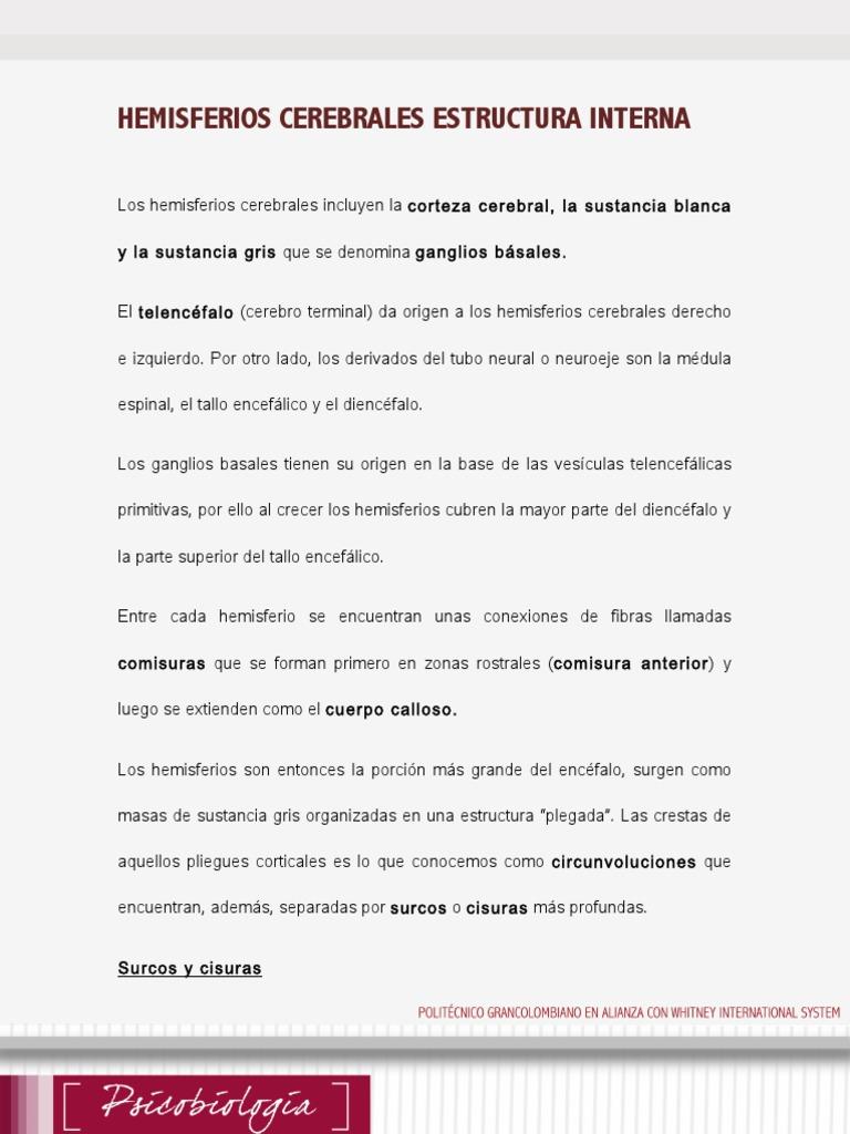 Lectura Sermana 5 Estructura Interna Pdf