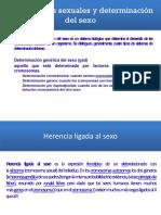 Cromosomas sexuales y determinación del sexo.pptx