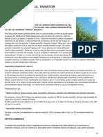 Formula-As.ro-plantele Iernii PIRUL TARATOR