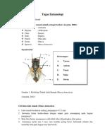 Entomologi ( D4 KL)