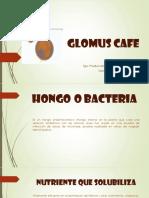 Glomus Cafe