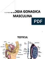27 Apr 2017 Patologia Gonadica Masculina. Ovarul. Infertilitatea - Prof. Fica