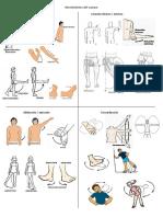 Anatonia Movimientos Del Cuerpo