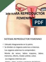 sistemareproductorfemenino-111023220615-phpapp02