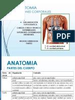 Clase 1 Anatomia  Regiones Corporales y Cavidades