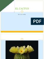 elcactus-130321205201-phpapp02