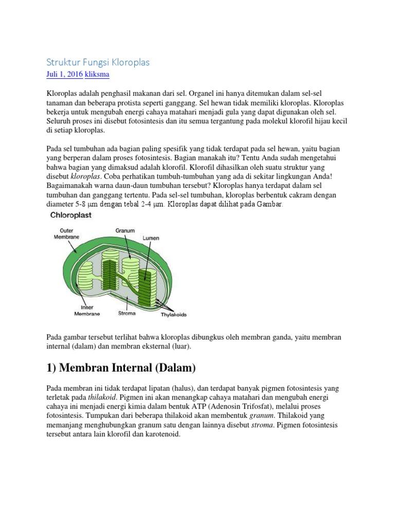 Struktur Fungsi Kloroplas