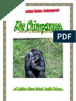 *Endangered* African Chimpanzee, by Donnette E Davis, St Aiden's Homeschool, South Africa