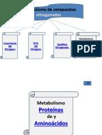 1.-Metabolismo_de_compuestos_nitrogenados.pptx