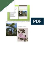Plantas Nativas d Ela Republica Dominicana