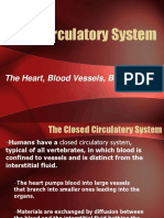 10 General Anatomy of the Cardiovascular System