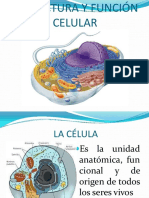 estructurayfuncincelular-120309215301-phpapp01