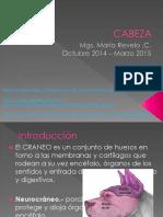 Osteologia de La Cabeza