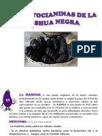 Las Antocianinas de La Mashua Negra